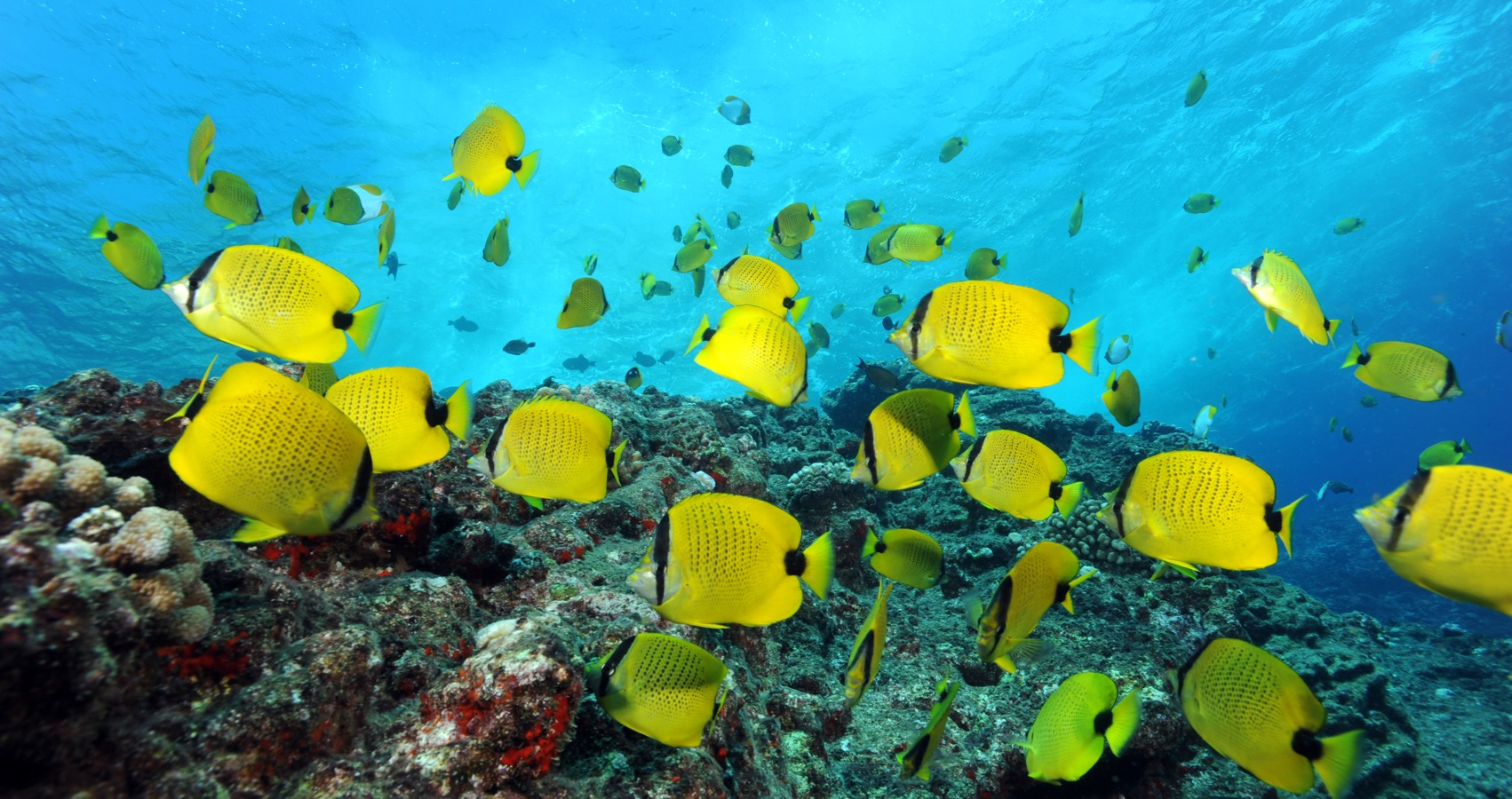 photo of butterfly fish