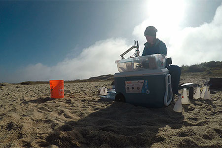 scientist doing study on the beach