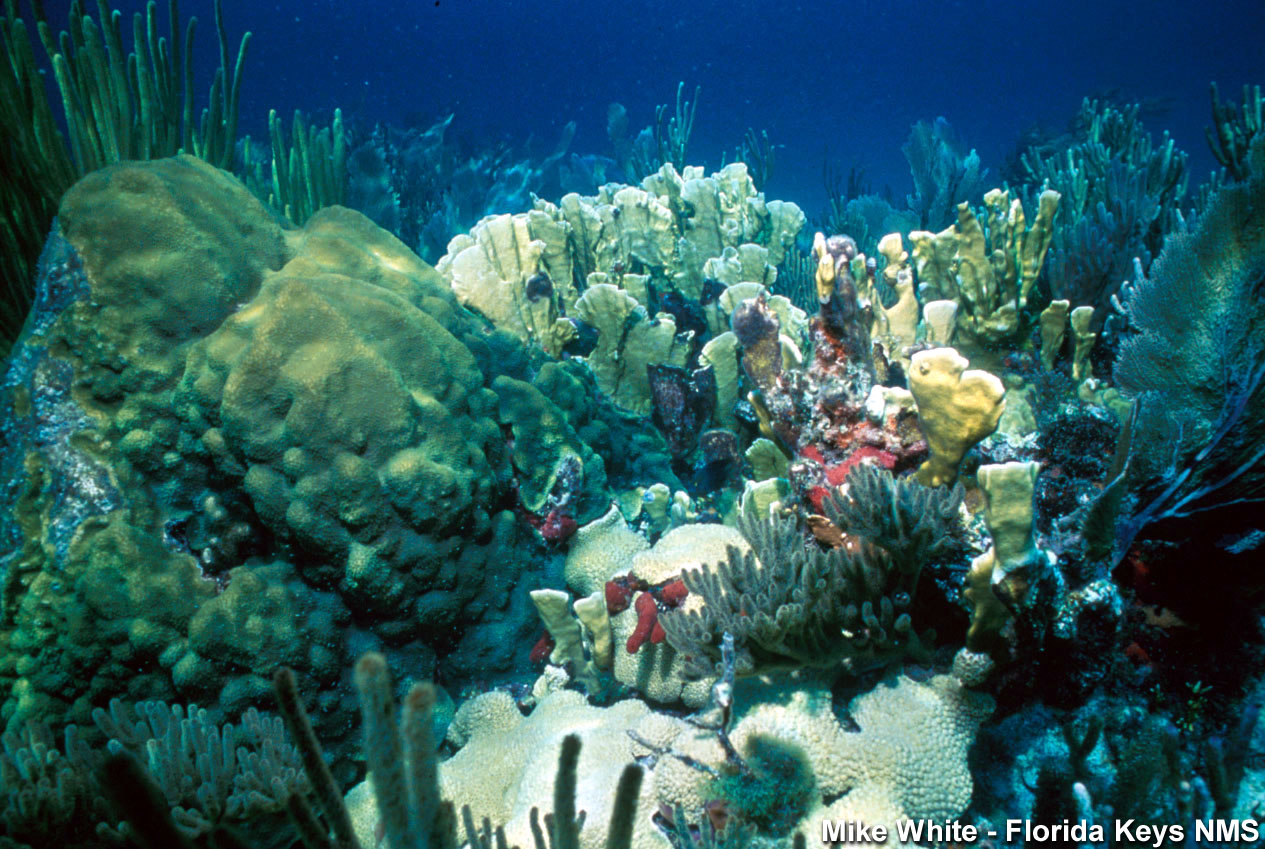 Florida keys nms coral reef for Key city fish