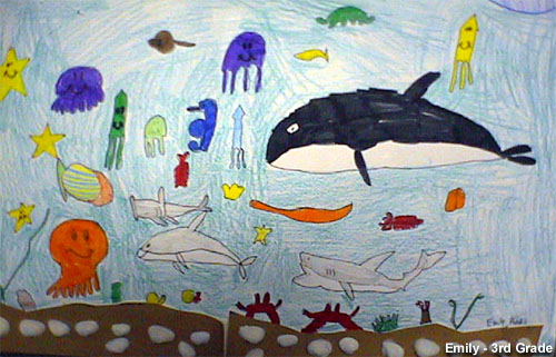 Stellwagen Bank NMS: Ocean Life drawing