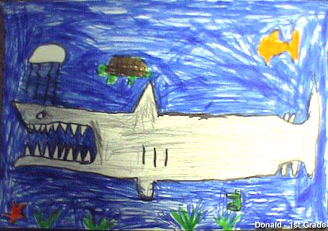Stellwagen Bank Nms White Shark Drawing