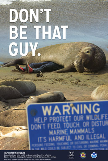 poster warning not to get to close to wildlife. image of an elephant seal on top of a person