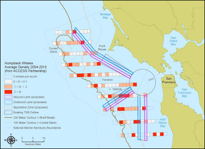 Blue and Humpback whale sightings and the proposed shipping lane shifts in the approach to San Francisco bay