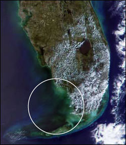 Figure 13. 2002 satellite image of a black water event north of the lower Florida Keys (Photo: NASA).