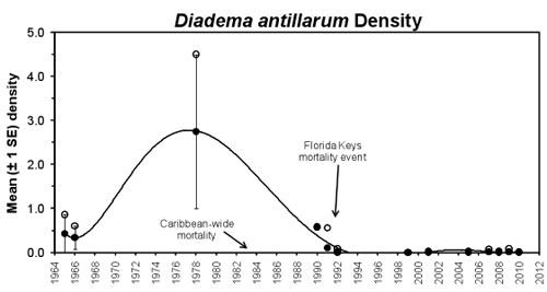 Figure 36.Temporal patterns in mean Diadema antillarum density on shallow spur and groove reefs in the Florida Keys. (Data: Randall et al. 1964, McPherson 1968, Forcucci 1994, Bauer 1980, Chiappone et al. 2002b, c, 2008)