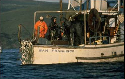 Figure 25. The commercial fishery for herring is not always opened in Tomales Bay and is regulated by the California Department of Fish and Game. (Photo: R. Allen)