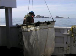 Figure 47. Farallon scientist readies a hoop net to sample for plankton near the South Farallon Islands. (Photo: J. Hall, GFNMS)