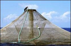 Figure 14. Kona Blue aquaculture. (Photo: NOAA)