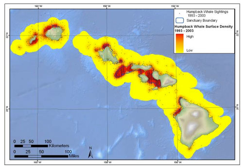 Humpback whale surface sightings and estimated surface density based on aerial survey data from 1993 to 2003. The aerial survey data used in this map only counts whales at the ocean surface. Also, note that the lower density areas (in yellow) should not be viewed as areas where there are no whales, rather as areas where density is lower than in higher density areas (orange/red); also the terms in the map key:
