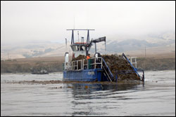 Figure 26. A kelp harvester operating off San Simeon. Kelp is harvested in the sanctuary at a variety of locations to sustain aquaculture operations and to be turned into a variety of products. Photo: K. Karr, UCSC