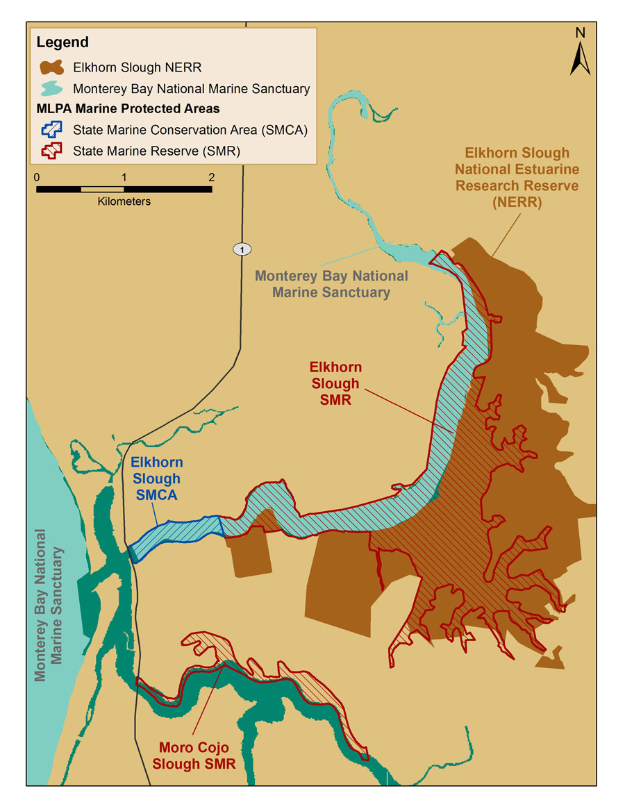 Figure 5.  The Monterey Bay National Marine Sanctuary (light blue) includes Elkhorn Slough east of the Hwy One bridge and west of the tide gate at Elkhorn Road and toward the center channel from the mean high water line, excluding areas within the Elkhorn Slough National Estuarine Research Reserve (brown). Two California Marine Life Protection Act (MLPA) Marine Protected Areas overlap with Monterey Bay sanctuary in this area: Elkhorn Slough State Marine Reserve (red hatching) and Elkhorn Slough State Marine Conservation Area (blue hatching). The data used to map the MLPA MPAs do not replace the legal description of boundaries found in Title 14, California Code of Regulations. Map: S. DeBeukelaer, NOAA/MBNMS