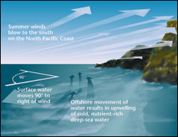 Figure 7. Southward-blowing winds are associated with a net transport of surface waters away from the coastline, resulting in intermittent upwelling. (Image: Oregon Sea Grant)