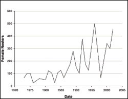 Figure 24. 	Nester abundance shown as the number of female green sea turtles nesting each year at East Island (French Frigate Shoals)  from 1973 to 2002. (Source: Balazs and Chaloupka 2003.)