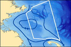 This image depicts the general oceanographic current regime (in blue) around Stellwagen Bank.