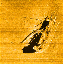 Figure 57. Site assessments are conducted using a variety of data, from sonar images to direct observation by divers. This side-scan sonar image of the schooner M. F. Merrick (discovered by the sanctuary in 2011) is a good example and offers much useful data. At 300 feet deep, the wreck's assessment relied chiefly on this image, which in turn informed follow-up ROV and SCUBA dives to the site.