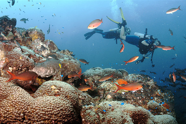 diver swimming above coral reef