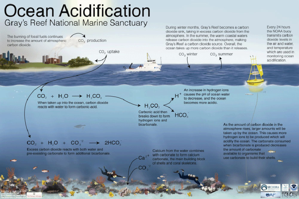 Climate Change and Ocean Acidification at Gray's Reef