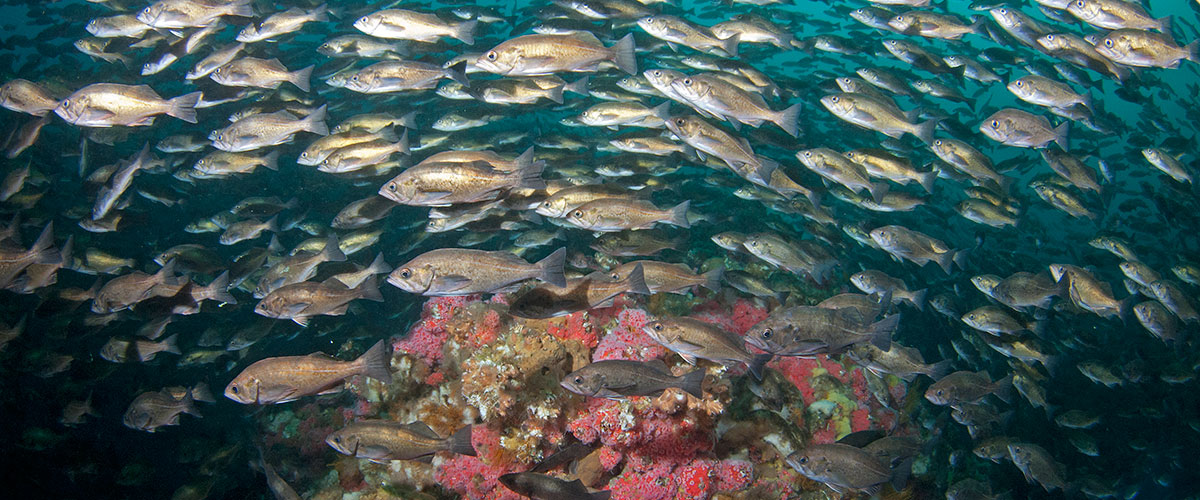 photo of a school of fish