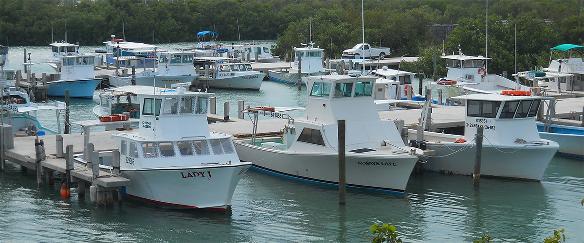 Socioeconomics florida keys commercial fishing for Florida commercial fishing license