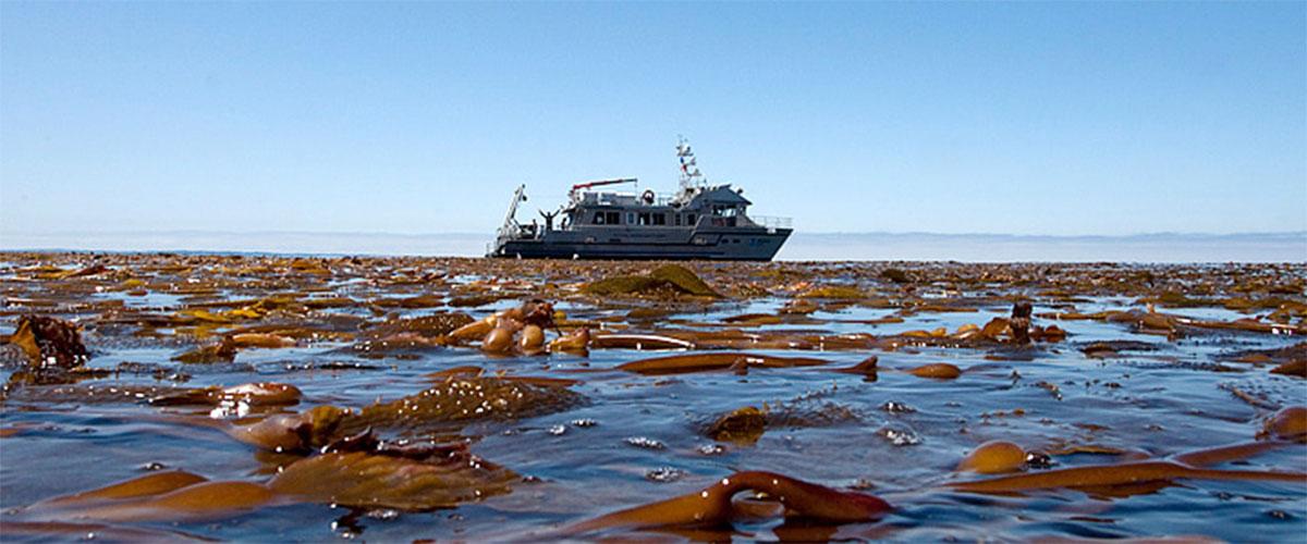 impacts on kelp forests office of national marine sanctuaries. Black Bedroom Furniture Sets. Home Design Ideas