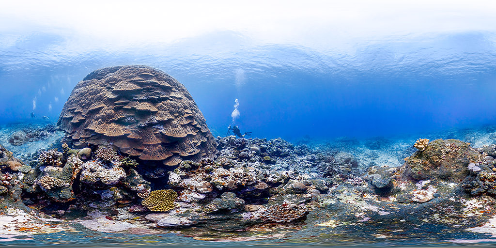 diver photographing big mama coral in amercian samoa