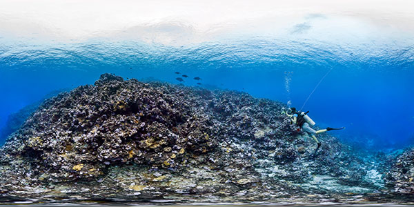 diver photographing the coral reef, fish are swimming by