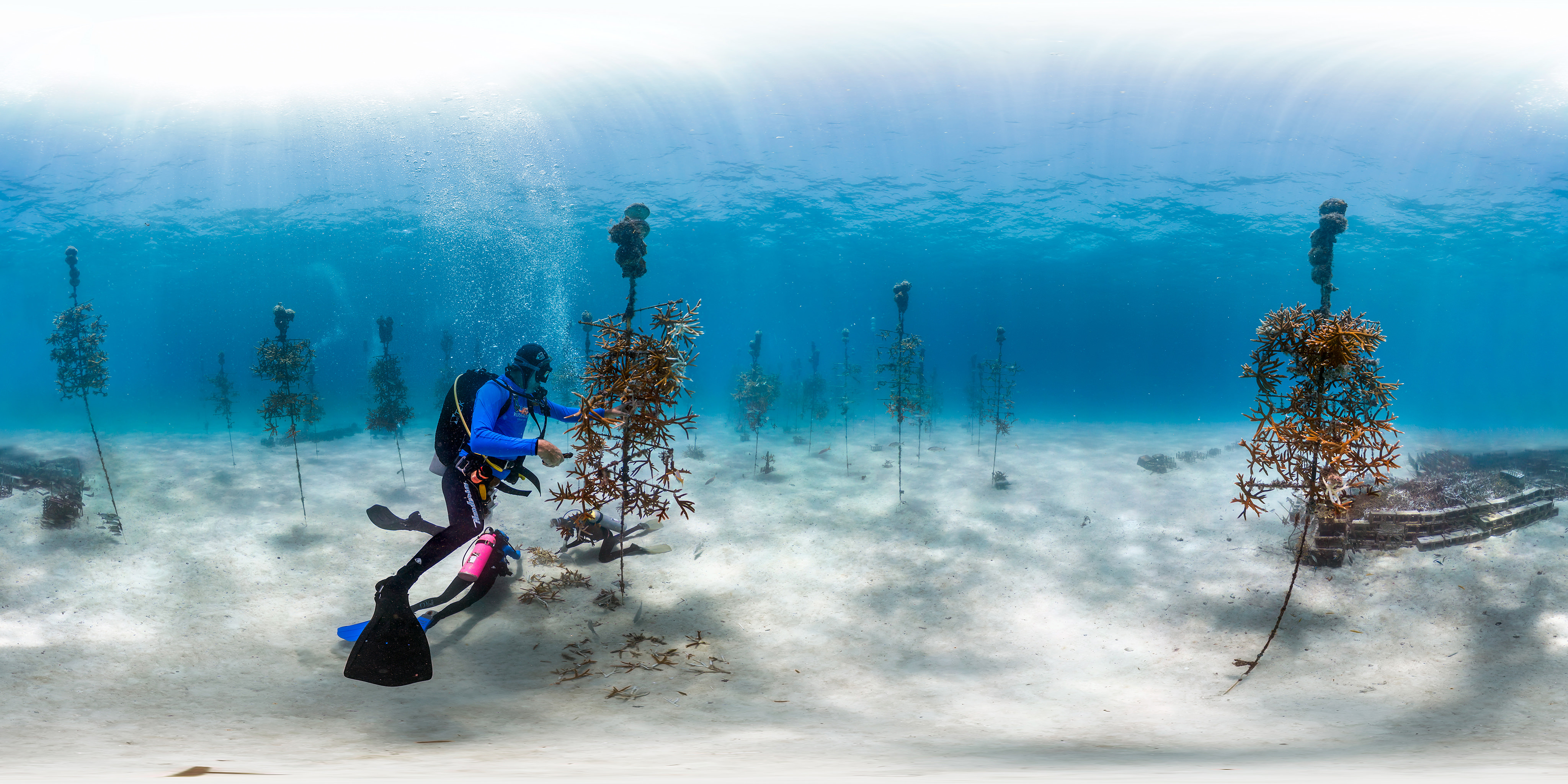Diver Working On A C Nursery Home Multimedia Virtual Dives Florida Keys