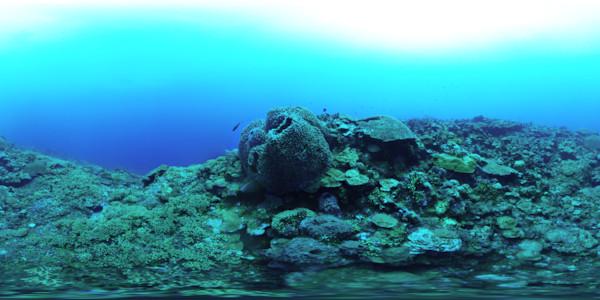 Barrel Sponge At East Garden Bank (2014)