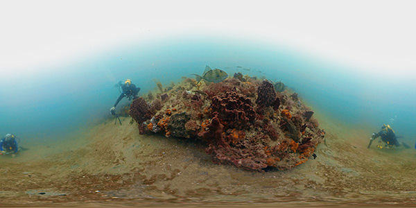 NOAA divers collect photographs at a low relief ledge within the Research Area of Gray's Reef National Marine Sanctuary