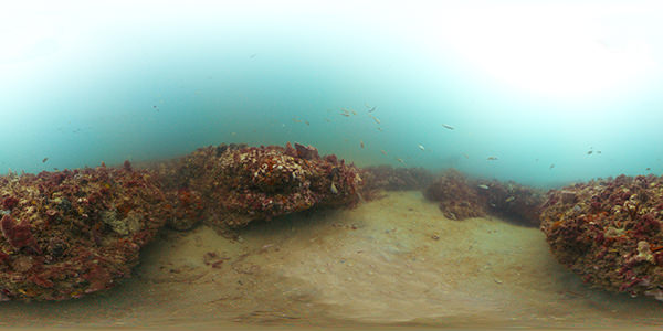The ledges of Gray's Reef National Marine Sanctuary are covered with marine organisms