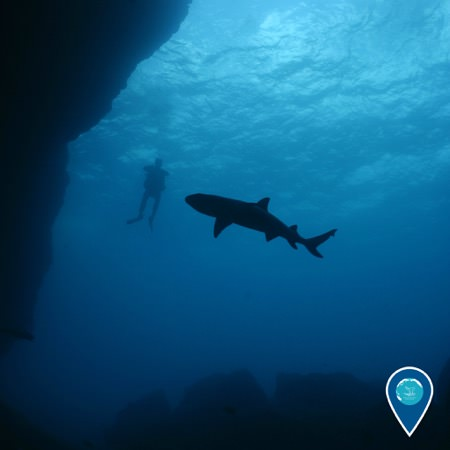 shark swimming by a diver