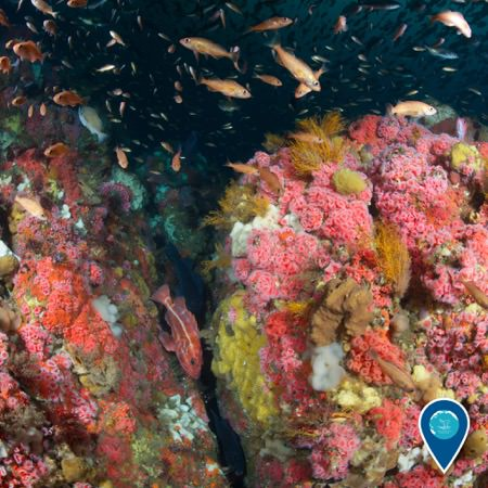 a rocky habitat teaming with marine life