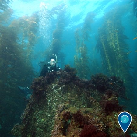 diver looking over a shipwreck, a kelp forest can be seen in the background
