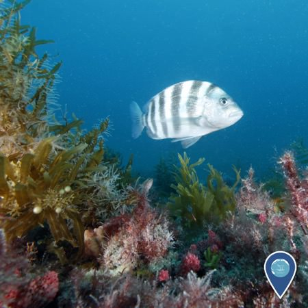 live-bottom reef cover with marine life and a fish swimming over