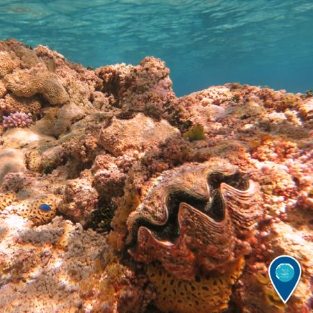Pink coralline algae dominates the atoll's fringing reef, giving the reef a rosy hue