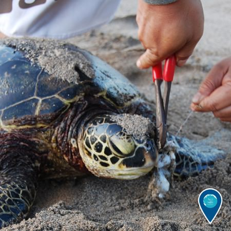 a person using pliers to remove a fishing hook from a sea turtle on the beach