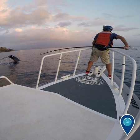 a Hawaiian Islands Entanglement Response Network member preparing to assist an entangled humpback whale