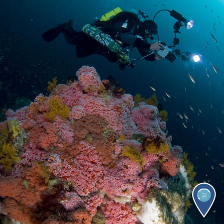 diver photograhing a coral reef
