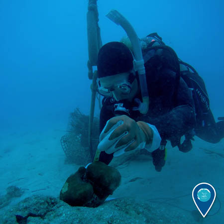 diver assessing damage to coral