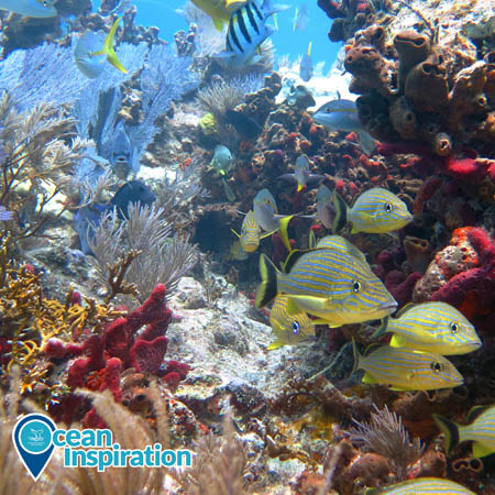coral reef with fish swimming around