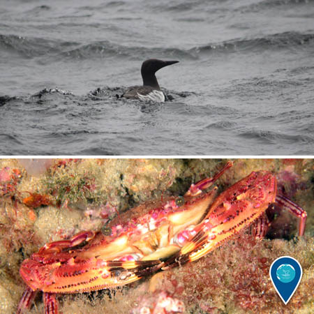 top: seabird swimming, bottom: crab