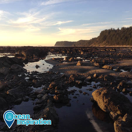 rocky intertidal zone olympic coast