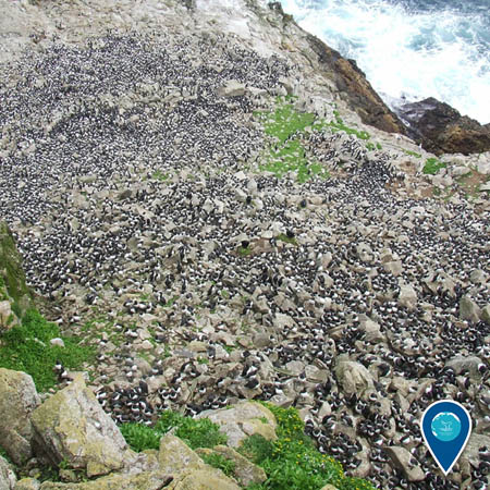 a large mass of seabirds crowd onto the rocky outcroppings of the Farallon Islands