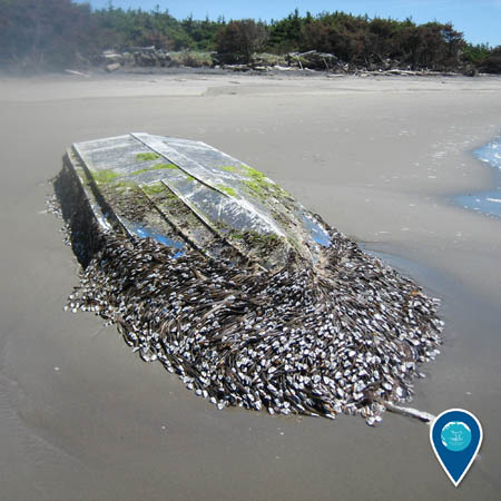 shipwreck on the beach covered invasive species