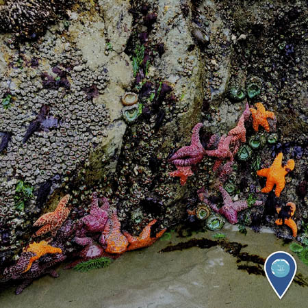 tidepool with many creatures like sea stars, mollusks, and sea anemones