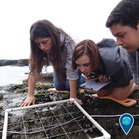 Three students kneel over a quadrat monitoring tool and observe life in the rocky intertidal zone.