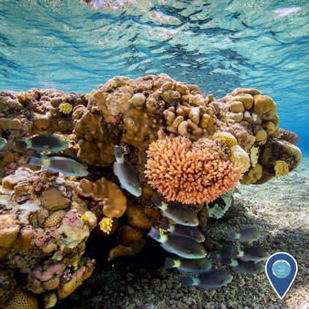 A lush coral reef including several species of coral and other invertebrates. Fish swim around the coral.