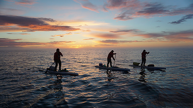 three paddleboarders on the water at sunset