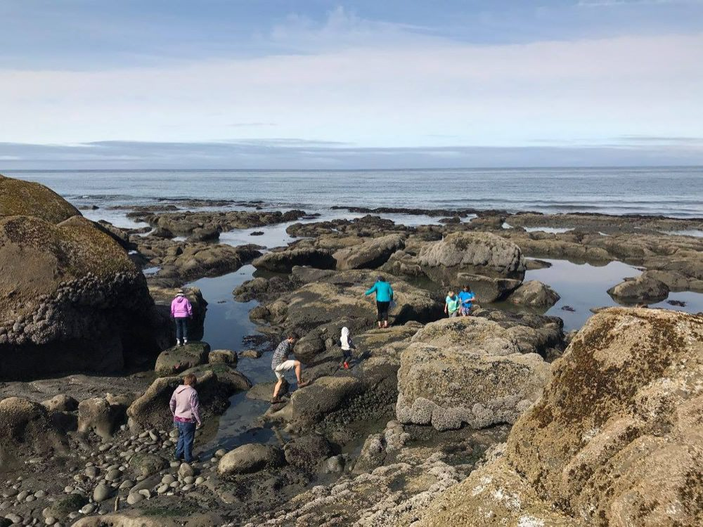 visitors exploring tidepools