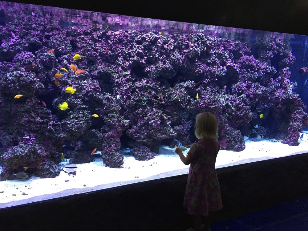 child in front of a fishtank
